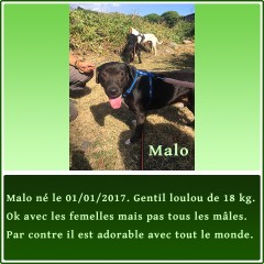 gallery/fiche-adoption-malo