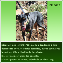 gallery/fiche-adoption-niout