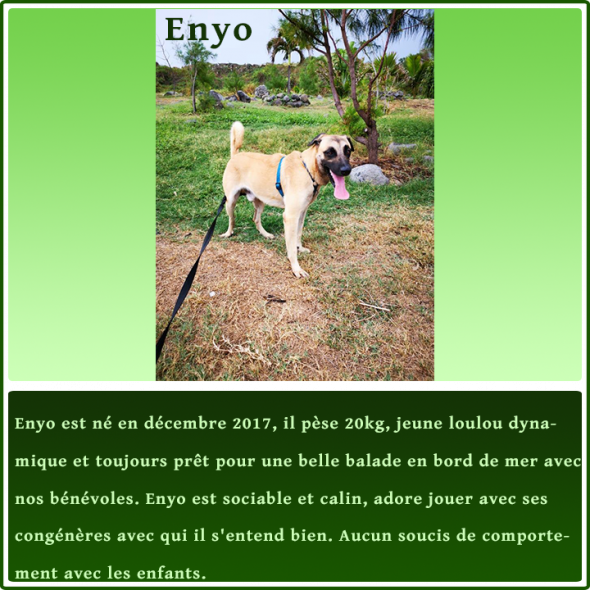 gallery/fiche-adoption_enyo
