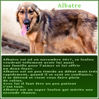 gallery/fiche-adoption_albatre